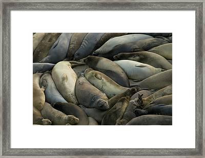 Usa California Point Reyes National Framed Print