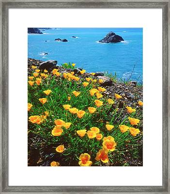 Usa, California, Poppies Framed Print by Jaynes Gallery