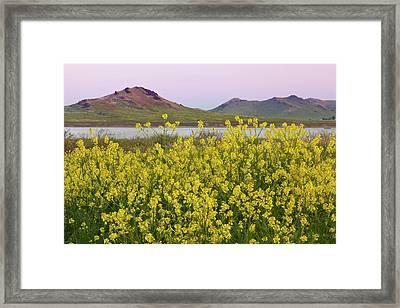 Usa, California, Porterville Framed Print by Jaynes Gallery