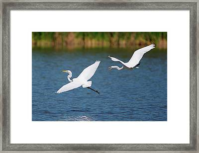 Usa, California, San Diego, Lakeside Framed Print by Jaynes Gallery
