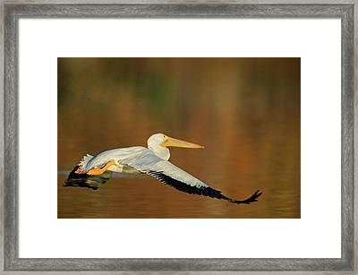 Usa, California, Santee Lakes Park Framed Print