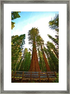 Usa, California, Sequoia, Kings Canyon Framed Print