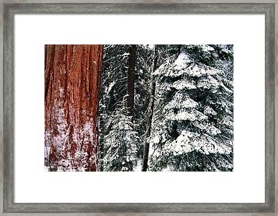 Usa, California, Sequoia National Park Framed Print by Inger Hogstrom
