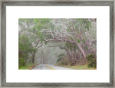 Usa, California Tree-lined Road Framed Print by Jaynes Gallery