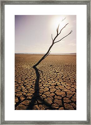 Usa, California, Tree Snag And Cracked Framed Print