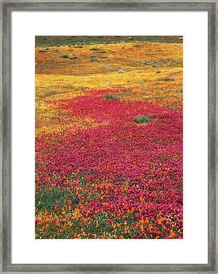 Usa, California, View Of Owl's Clover Framed Print