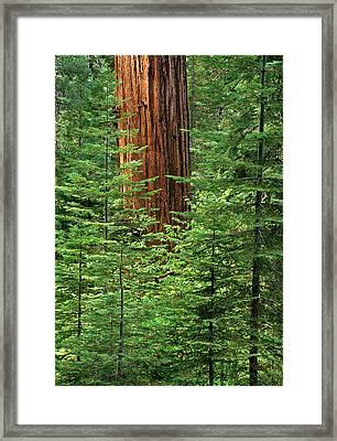 Usa, California, Yosemite National Park Framed Print by Ann Collins