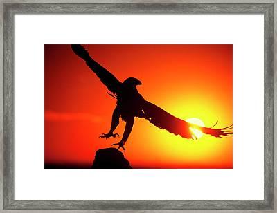 Usa, Colorado A Falconer's Golden Eagle Framed Print