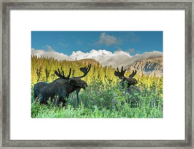 Usa, Colorado, Arapaho National Forest Framed Print by Jaynes Gallery
