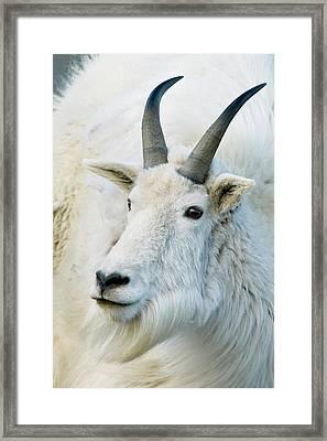 Usa, Colorado, Mount Evans Recreation Framed Print by Jaynes Gallery