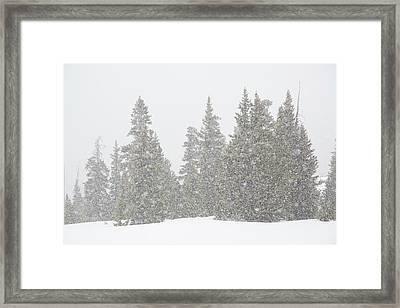 Usa, Colorado Summer Snowstorm Framed Print by Jaynes Gallery