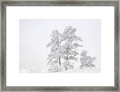 Usa, Colorado, Ute Pass Framed Print by Jaynes Gallery