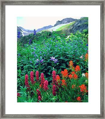 Usa, Colorado, Wildflowers In Yankee Framed Print