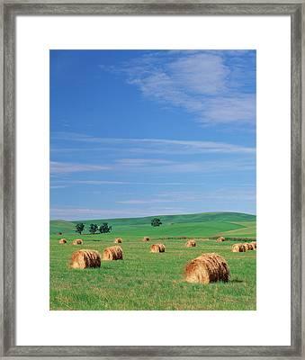 Usa, Eastern Washington, Hay Bales Framed Print by Adam Jones