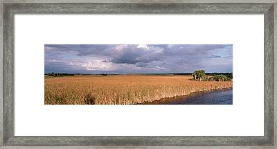 Usa, Florida, Big Cypress National Framed Print by Panoramic Images