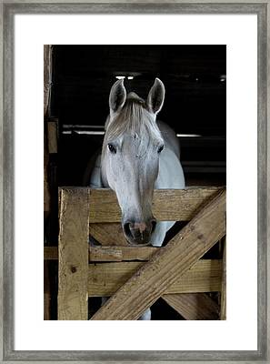 Usa, Florida Close-up Of Horse Peering Framed Print by Jaynes Gallery