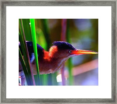 Usa, Florida, Delray Beach Framed Print
