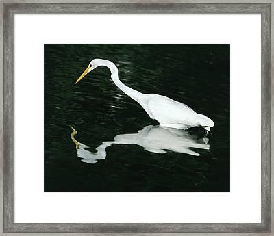 Usa, Florida, Ding Darling National Framed Print by Jaynes Gallery