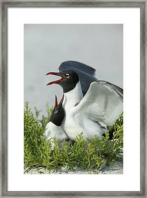 Usa, Florida, Egmont Key State Park Framed Print by Jaynes Gallery