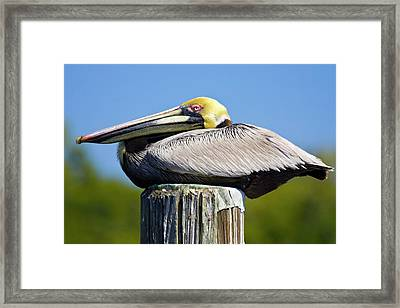Usa, Florida, Everglades City, Big Framed Print by Jaynes Gallery