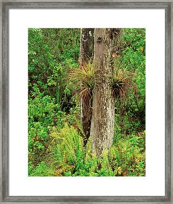 Usa, Florida, Everglades National Park Framed Print by Adam Jones
