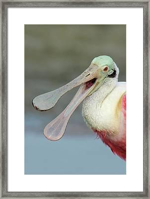 Usa, Florida, Fort De Soto Park Framed Print by Jaynes Gallery