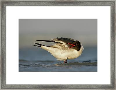 Usa, Florida, Fort De Soto Park, Mullet Framed Print by Jaynes Gallery