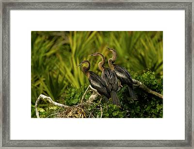 Usa, Florida, Orange County, Gatorland Framed Print by Jaynes Gallery