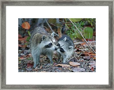 Usa, Florida, Sanibel, Ding Darling Framed Print by Jaynes Gallery