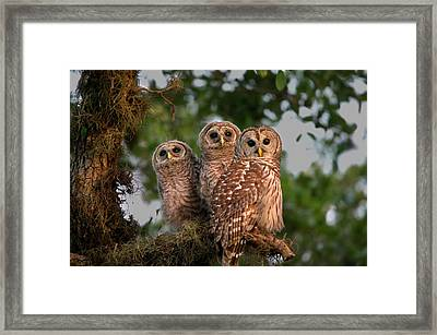 Usa, Florida, Viera Wetlands Framed Print by Jaynes Gallery