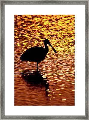 Usa, Florida, Vierra Wetlands Framed Print