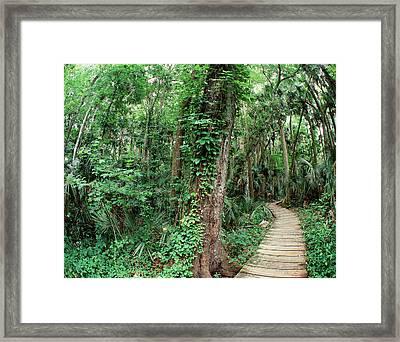 Usa, Florida, View Of Ocala National Framed Print by Zandria Muench Beraldo