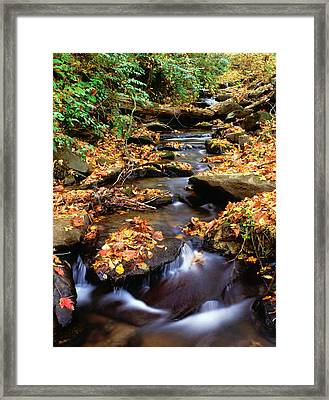 Usa, Georgia, Cherokee National Forest Framed Print by Jaynes Gallery