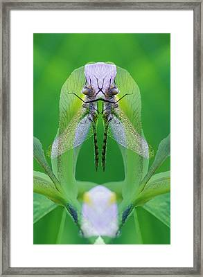 Usa, Georgia Dragonfly Montage Credit Framed Print by Jaynes Gallery