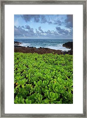 Usa, Hawaii, Kauai, Poipu Framed Print by Jaynes Gallery