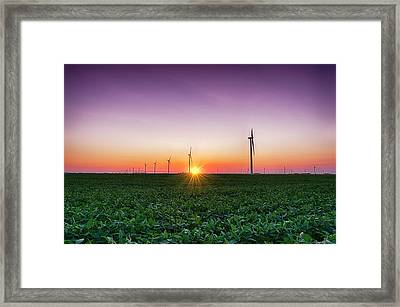 Usa, Indiana Soybean Field And Wind Framed Print