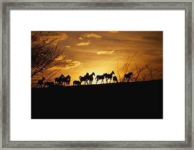 Usa, Kentucky, Horses Running, Sunset Framed Print by Panoramic Images