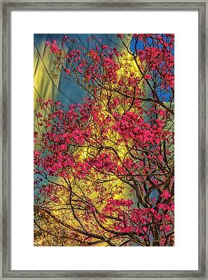 Usa, Los Angeles, Ca, The Disney Center Framed Print by Rona Schwarz