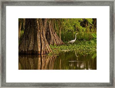 Usa, Louisiana, Lake Martin Framed Print by Jaynes Gallery
