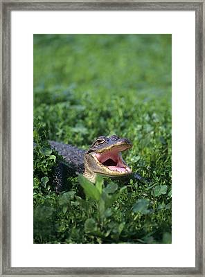 Usa, Louisiana, Sabine National Framed Print by Jaynes Gallery