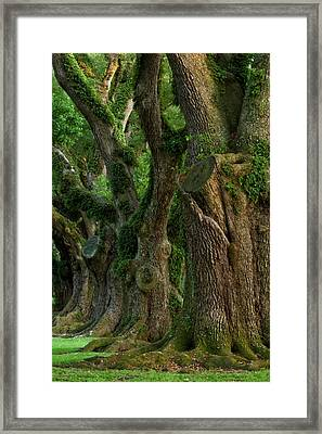 Usa, Louisiana, St Framed Print