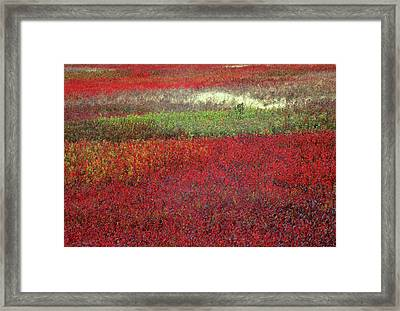 Usa, Maine Blueberry Fields In Autumn Framed Print by Jaynes Gallery