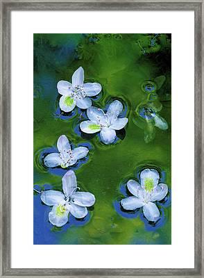 Usa, Maryland, Azalea Blossoms Floating Framed Print by Jaynes Gallery