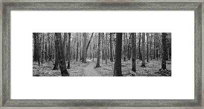 Usa, Michigan, Black River National Framed Print by Panoramic Images
