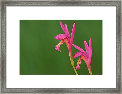 Usa, Michigan, Close-up Of Native Framed Print by Jaynes Gallery