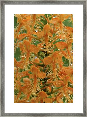 Usa, Michigan, Close-up Of Yellow Framed Print by Jaynes Gallery