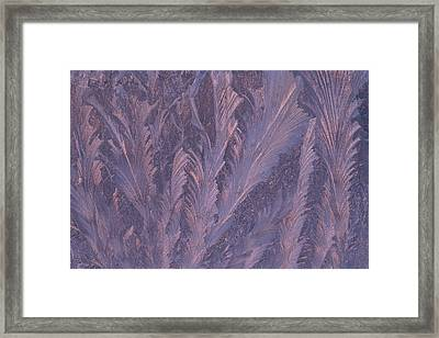 Usa, Michigan, Feathery Frost Patterns Framed Print by Jaynes Gallery