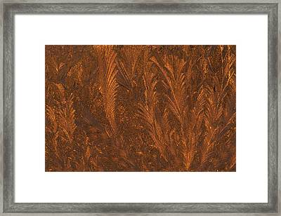 Usa, Michigan, Golden Frost Patterns Framed Print by Jaynes Gallery