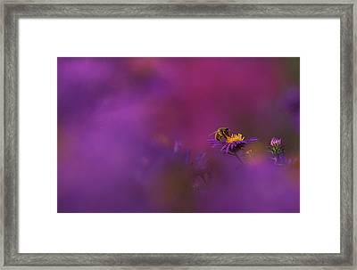 Usa, Michigan, Honeybee Pollinating New Framed Print