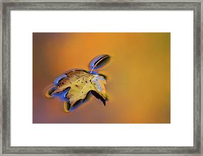 Usa, Michigan, Maple Leaf Floating Framed Print by Jaynes Gallery